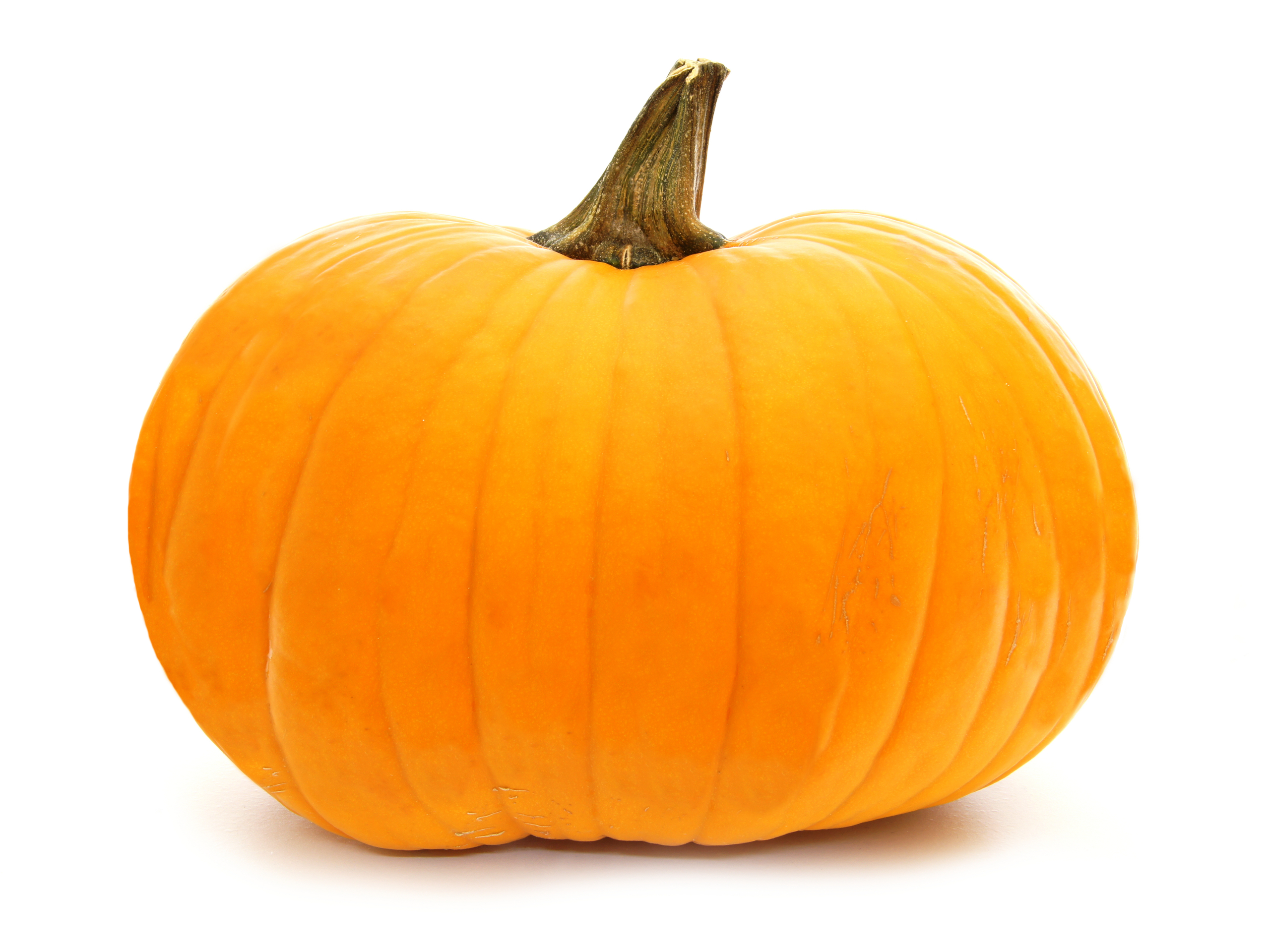Single pumpkin isolated on white