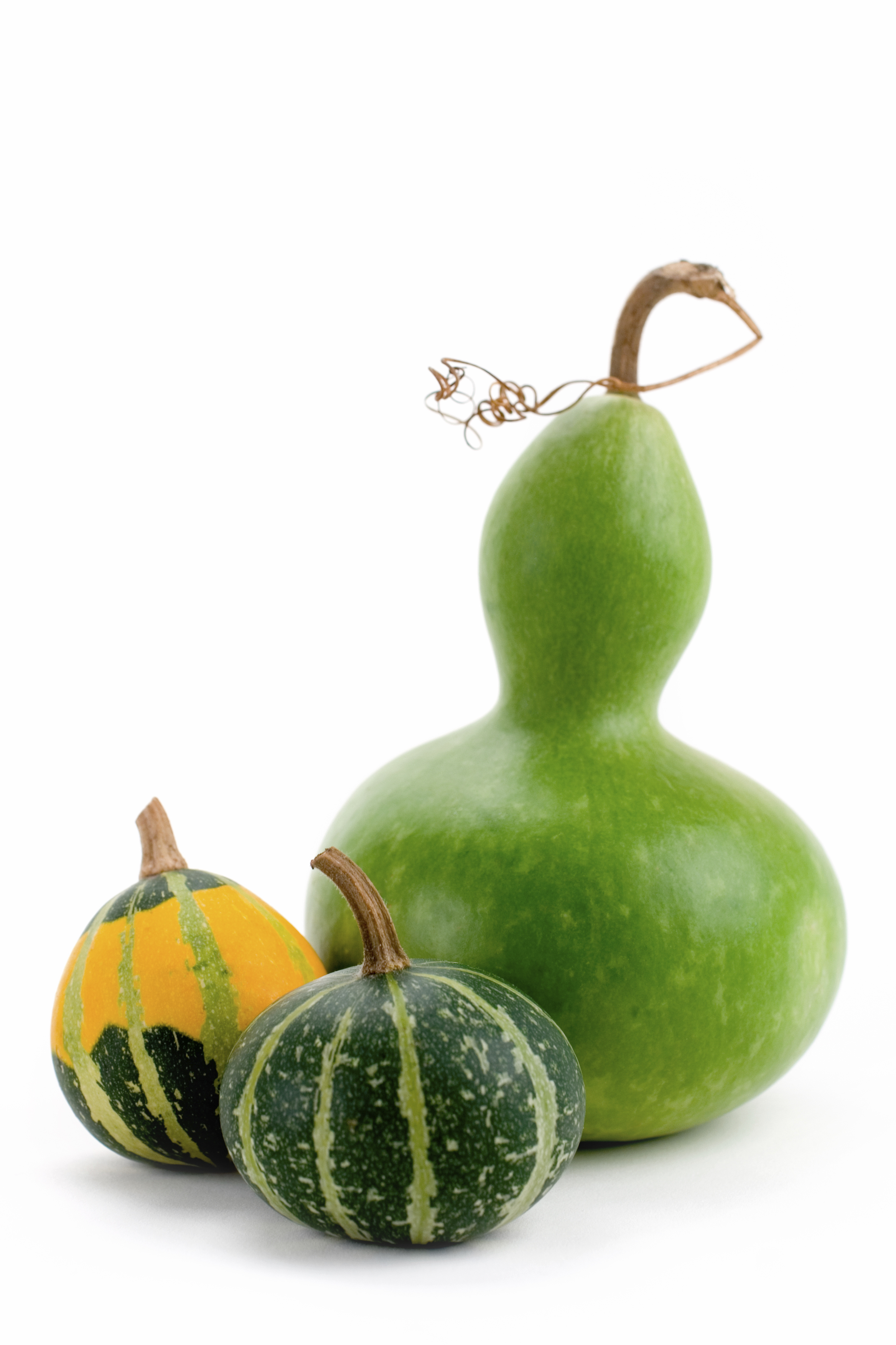 Fall my blog for Where to buy gourds for crafts