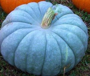 blue-pumpkin-smaller