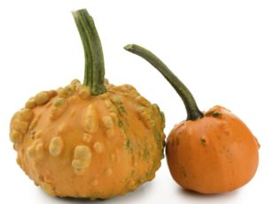 knucklehead-pumpkin-smaller