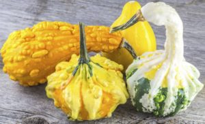 ornamental-gourds-smaller