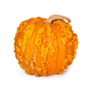 Pumpkin With Warts