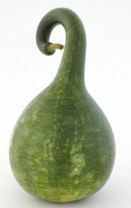 swan-gourd-smaller