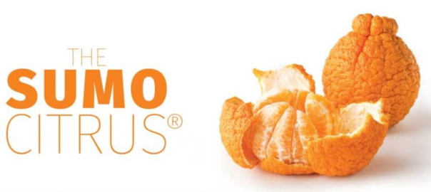 Picture of Sumo Citrus