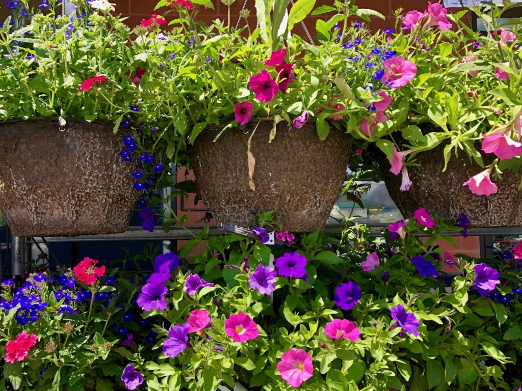 hanging floral baskets